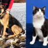 SHELTER SUNDAY: Meet Eli (Rottweiler/German shepherd mix) and Kip (tuxedo cat)