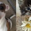 SHELTER SUNDAY: Meet Hund (pit bull terrier) and Roger (tabby kitten)