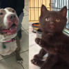 SHELTER SUNDAY: Meet Vanilla (pit bull terrier) and Batman (black kitten/crime-fighter)