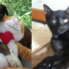 SHELTER SUNDAY: Meet Jake (Lab/hound mix) and Ivy (black kitten)