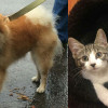 SHELTER SUNDAY: Meet Aspen (Pomeranian) and Annie and Allie (tabby kittens)