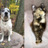 SHELTER SUNDAY: Meet Toby (Pointer mix) and Olivia (tortoiseshell cat)