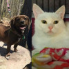 SHELTER SUNDAY: Meet Gracie (basset hound mix) and Aurora (white cat)