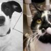 SHELTER SUNDAY: Meet Winston (Dalmatian/Jack Russell terrier mix) and Panda (bicolor cat)
