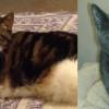 SHELTER SUNDAY: Meet Baby Doll (calico cat) and Diana (gray cat)