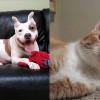 SHELTER SUNDAY: Meet Hund (pit bull terrier) and Pumpkin (orange tabby cat)