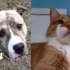 SHELTER SUNDAY: Meet Spanky (brindle pit bull) and Morris (orange tabby cat)
