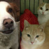 SHELTER SUNDAY: Meet Boo-Boo (Brittany spaniel mix) and Sammy and Suzie (orange tabby cats)