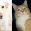SHELTER SUNDAY: Meet Jasper (yellow lab/chow mix) and Chase (orange tabby cat)