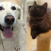SHELTER SUNDAY: Meet Dusty (Labrador) and Devon (Maine Coon kitten)