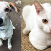 SHELTER SUNDAY: Meet Chalkie (coonhound mix) and Loki (white cat)