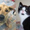 SHELTER SUNDAY: Meet Lady (German shepherd/Lab mix) and Gemma (tuxedo kitten)