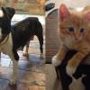 SHELTER SUNDAY: Meet Franny (pit bull mix) and Sully (orange tabby kitten)