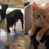 SHELTER SUNDAY: Meet Franny (pit bull mix) and Sully (orange tabby kitten)