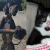 SHELTER SUNDAY: Meet George (Great Dane) and Sadie (tuxedo kitten)