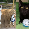 SHELTER SUNDAY: Sam and Finn (bulldog and Jack Russell terrier) and Eddie (black kitten)