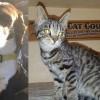 SHELTER SUNDAY: Meet Freckles (senior springer spaniel) and Logan (striped tabby kitten)