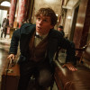 MOVIE REVIEW: 'Fantastic Beasts and Where to Find Them' is world-building magic worth discovering