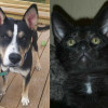 SHELTER SUNDAY: Meet Jax (German shepherd/husky mix) and Libby (black kitten)
