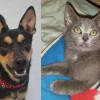 SHELTER SUNDAY: Meet Newman (German shepherd mix) and Smokey (gray kitten)