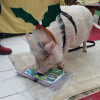 VIDEO: Watch PeeWee the pig paint a masterpiece at The Marketplace at Steamtown in Scranton