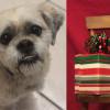SHELTER SUNDAY: Meet Jake (Shih Tzu/Bichon mix) and Holly (calico kitten)
