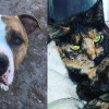 SHELTER SUNDAY: Meet George (pit bull terrier) and Franny (tortoiseshell cat)