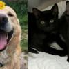 SHELTER SUNDAY: Meet Shea (German shepherd mix) and Luna and Rain (black sister kittens)