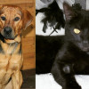 SHELTER SUNDAY: Meet Wade (hound mix) and Dillion (black cat)