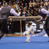 'America's Got Talent' winners Olate Dogs perform tricks at Sherman Theater in Stroudsburg on April 29