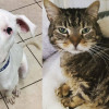 SHELTER SUNDAY: Meet Pence (Great Dane mix) and Freddie (striped tabby cat)