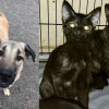 SHELTER SUNDAY: Meet Axel (Anatolian shepherd) and Paige and Piper (tortoiseshell kittens)