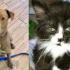 SHELTER SUNDAY: Meet Pablo (Shar Pei/pit bull mix) and Juliette (longhair kitten)