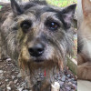 SHELTER SUNDAY: Meet Bubba and Dolly (bonded senior dogs) and Dennis (orange tabby)