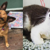 SHELTER SUNDAY: Meet Milo (collie mix) and Lacey (gray and white cat)