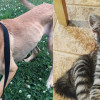 SHELTER SUNDAY: Meet Arya (retriever mix) and Tabitha (striped tabby kitten)