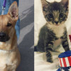 SHELTER SUNDAY: Meet Chopper (German shepherd mix) and Sage (striped tabby kitten)