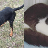 SHELTER SUNDAY: Meet Dover (bluetick coonhound) and Buttercup (gray and white kitten)