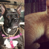 SHELTER SUNDAY: Meet Ellie (Boston terrier/pit bull mix) and Tipper (orange tabby kitten)