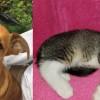 SHELTER SUNDAY: Meet Martin (Chihuahua mix ) and Zoey (striped tabby kitten)