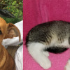 SHELTER SUNDAY: Meet Martin (Chihuahua mix ) and Zoey (striped tabby kitten)