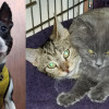 SHELTER SUNDAY: Thunder (Boston terrier mix) and Gilly and Bella (bonded kittens)
