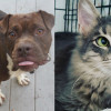 SHELTER SUNDAY: Meet Karma (boxer mix) and Bixby (medium hair kitten)