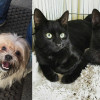 SHELTER SUNDAY: Meet Rico (Lhasa Apso mix) and Boo and Gomez (bonded black kittens)