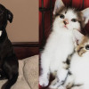 SHELTER SUNDAY: Meet Bond (Labrador) and Cookie and Cupcake (sister kittens)