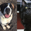 SHELTER SUNDAY: Meet Izzy (Saint Bernard) and Juno (black kitten)