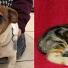 SHELTER SUNDAY: Meet Willie (Jack Russell terrier) and Chloe (striped tabby kitten)