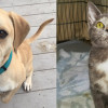 SHELTER SUNDAY: Meet Hercules (bulldog mix) and Remi (dilute calico kitten)