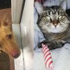 SHELTER SUNDAY: Meet River (pit bull mix) and Tiny (striped shorthair cat)