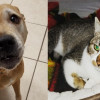 SHELTER SUNDAY: Meet Winter (bulldog/boxer mix) and Holly (tabby kitten)